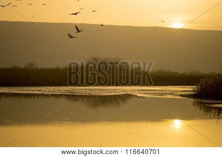 Sunrise In Agamon Hula Bird Refuge