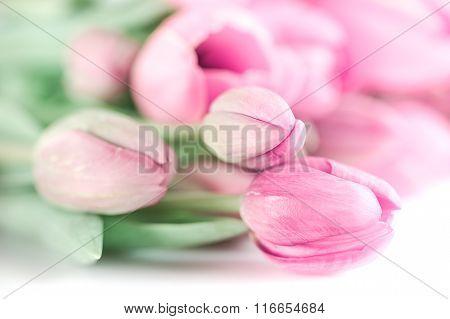 Colorful tulip bouquet