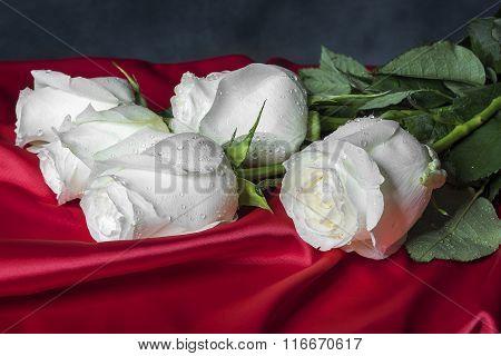 White rose on red satin.