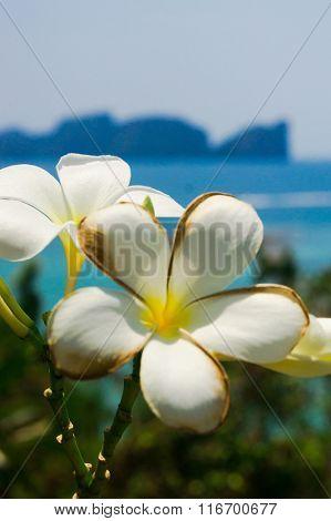 Tropical Verdure Sunny Petals