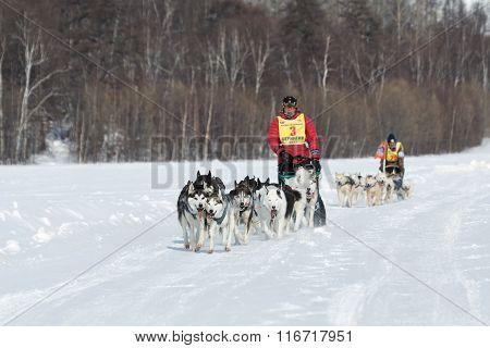 Kamchatka Extreme Dog Sledge Race Beringia. Russian Far East