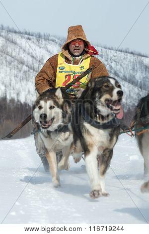 Kamchatka Extreme Dog Sled Racing Beringia. Russian Far East. Kamchatka Peninsula