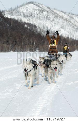 Kamchatka Extreme Dog Sledge Race Beringia. Russia, Far East, Kamchatka Peninsula