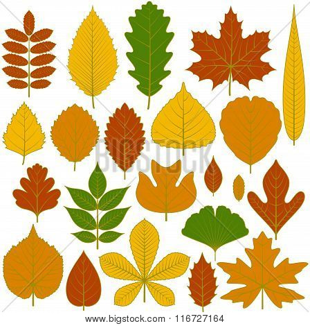 Set of tree leaves. Twenty different icons. Various elements for design. Cartoon vector illustration