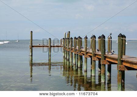 Birds on jetty