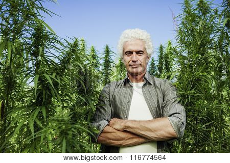 Farmer Posing In A Hemp Field