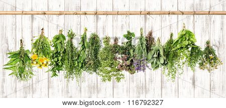 Medicinal Herbs. Herbal Apothecary. Lavender, Dandelion, Nettle