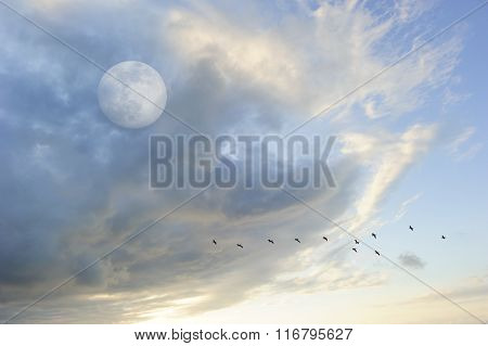 Moon Clouds Skies Birds Silhouette