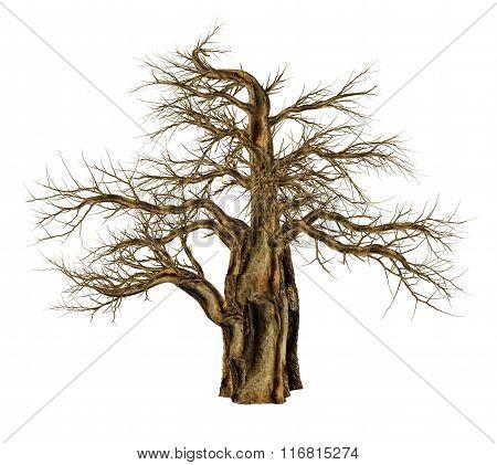 Baobab tree without leaves, adansonia digitata - 3D render