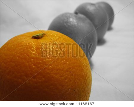Row Of Oranges 3