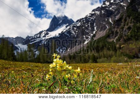 Spring mountain scenic with cowslip flowers (Primula veris) focus on foreground blur background