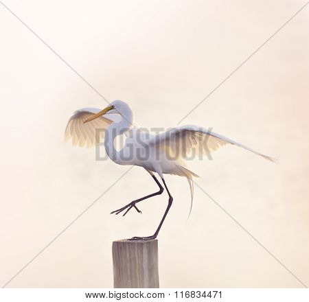 Snowy Egret with Spreaded Wings