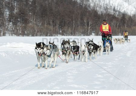 Kamchatka Extreme Dog Sled Racing Beringia. Russia, Far East