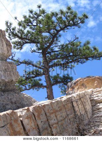 Denver Tree