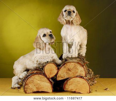 Puppies Climbing On Wood