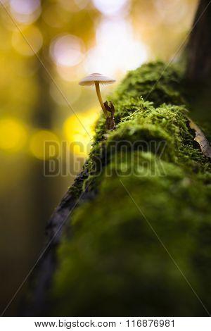 Mushrooms And Yellow Bokeh
