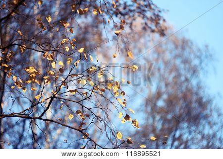 Abstract Degradation Autumn Paints