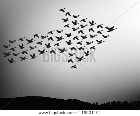 Flock Of Birds Flying In The Sky In An Arrow. Teamwork Concept