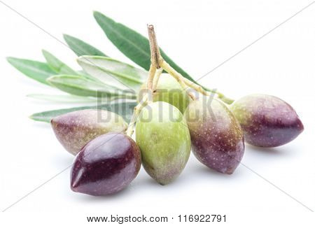 Fresh olives with leaves on the white background.