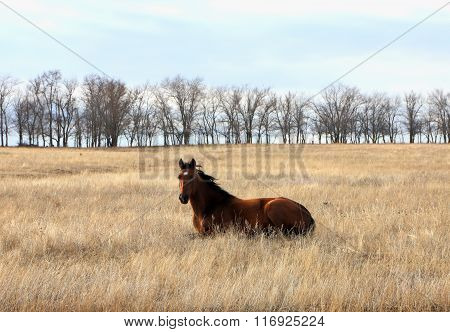 Horse lying on the grass