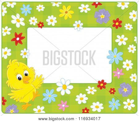 Border with a chick