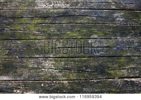 Part Of The Old Gray Board With Green Moss