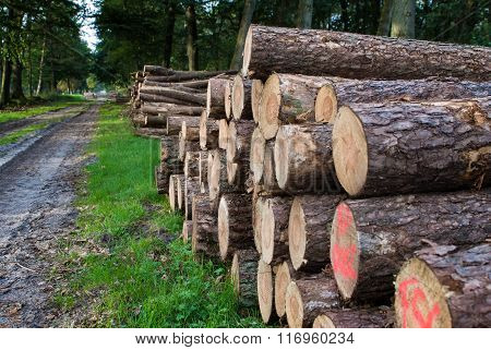 Timber Stacked Logs In The Forest