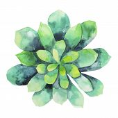 Watercolor green succulent isolated on white background. Cute floral element for your design poster