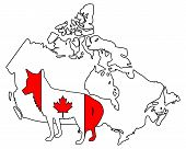 Detailed and colorful illustration of coyote Canada poster
