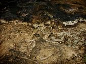 Carcinogenic crude oil pollution produced by illegal oil mining in East Java Indonesia. poster