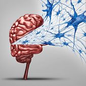 Brain neurons concept and human intelligence medical symbol represented by an open thinking organ with active neuron group with inside cell activity by neurotransmitters showing memory and cognitive health. poster