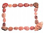 an assortment of shells shaped as a frame on plain background with lots of space to text or images poster
