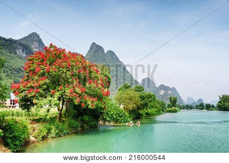 Amazing View Of Blooming Tree And The Yulong River, China