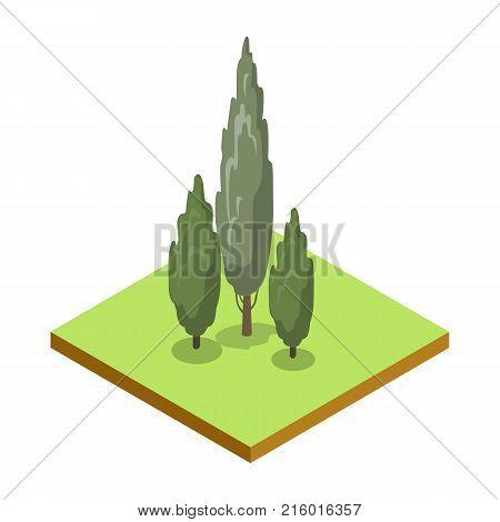 Poplar tree isometric 3D icon. Public park plant and green grass vector illustration. Nature map element for summer parkland landscape design.
