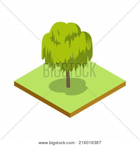 Willow tree isometric 3D icon. Public park plant and green grass vector illustration. Nature map element for summer parkland landscape design.