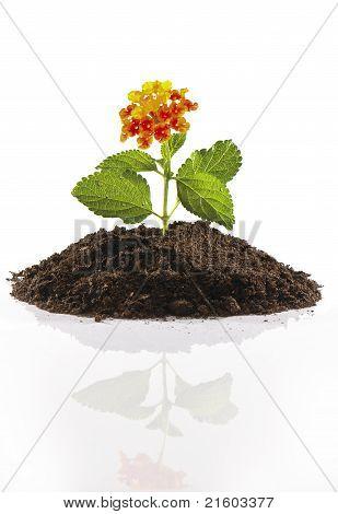 Small flower on pile of soil