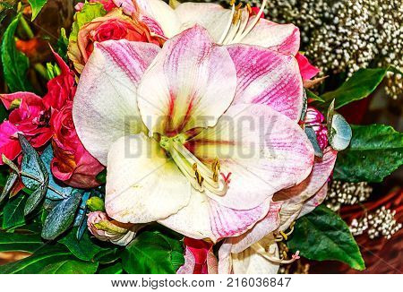 Floral arrangement mit Amaryllis and red roses