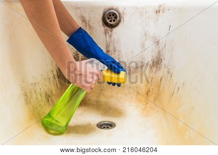 Hands in blue rubber worker hand gloves hold sponge and spray with detergent clean bath tub covered in fungus, dirt and mold. Female hands in gloves clean dirty old bathtub with corrosion and mould with detersive