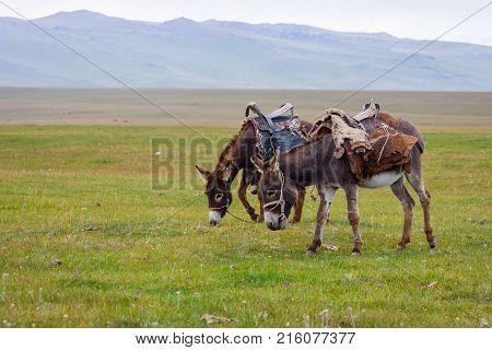 Two Donkeys At A Pasture