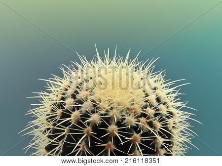Cactus. Art Gallery Fashion Design. Minimal Stillife. Green cactus Trendy Bright Summer Colors. Creative Unusual Style. Fashion Concept green background. Detail