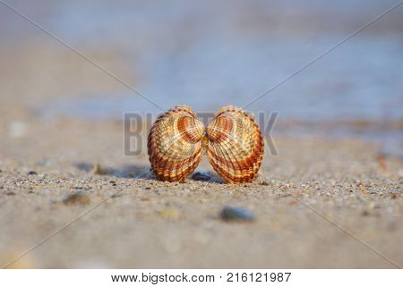Seashell on the sand at the beach, concept of summer vacation. One seashell on the beach by the sea