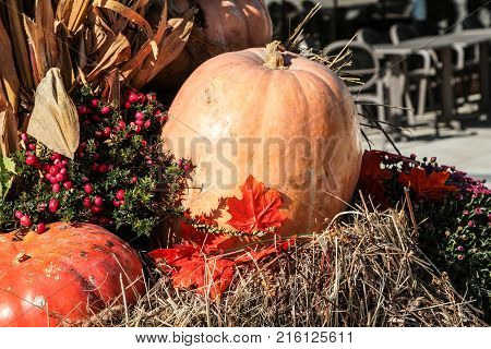 Ripe pumpkins laid in the cart on hay. Autumn harvest
