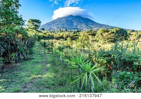 Grassy trail leads between loquat orchard & meadow of flowers to cloud covered Agua volcano in early morning light Guatemala, Central America