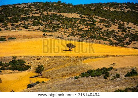 tree in the middle of the plain surrounded by hills