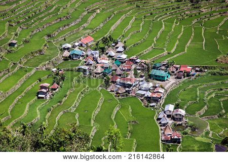 Village at 2000-year old Batad Rice Terraces, UNESCO Heritage, Central Luzon on Philipines, Southeast Asia
