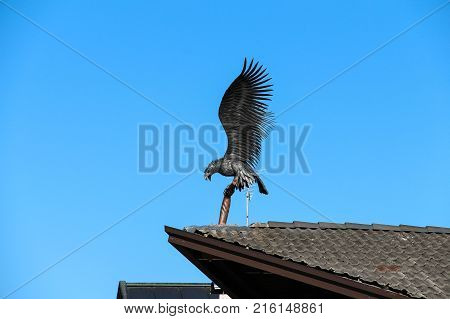 Italy Rocca Pietore - August 26 2016: the view of the decorative ironwork sculpture Eagle on the roof on August 26 2016 Veneto Italy.