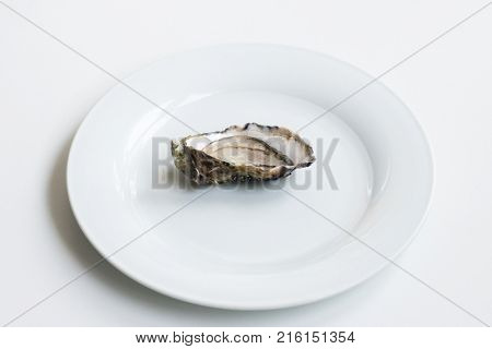 poster of Oysters. Raw fresh oysters are on white round plate, image isolated, with soft focus. Restaurant delicacy.