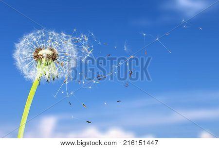Petals dandelion blow blowing green vector perspective