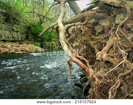 Erosion undercuts the Apple River bank in northern Illinois poster