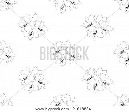 Amaryllis Seamless on White Background. Christmas Day. Vector Illustration.